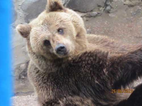 медведь забавляется с сеном на аляске самый жизнерадостный медведь в мире